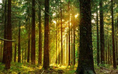 RTE international adopte une Politique environnementale et contribue à la création de puits de carbone grâce aux forêts